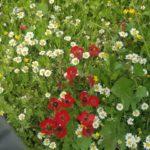 קחוונים ופרגים בטיולי ג'יפים בגולן בפסח